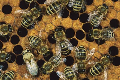 The Bees from Hyde Park on a team building event
